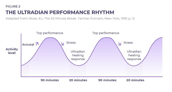 Upravljanje energijom i ultradijan ritam kod čovjeka